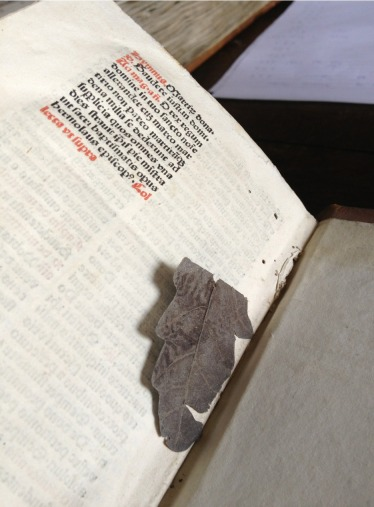 Zutphen, Librije, leaf bookmark in early print - Photo EK